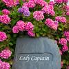 Lady Captain and Hydrangeas. Killarney, Ireland.