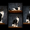 Kitty collage I