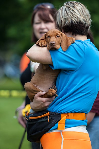 Bearsted Fun Dog Show, 2016 for Maidstone Borough Council