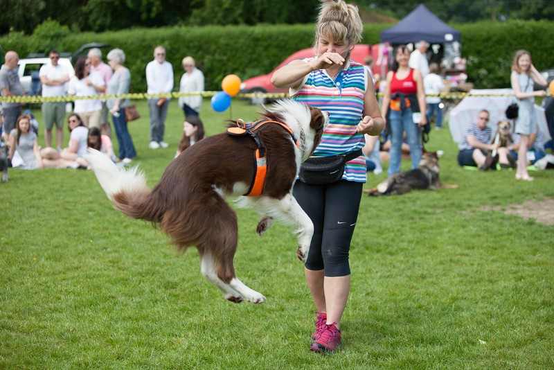 Bearsted Fun Dog Show 2016 for Maidstone Borough Council