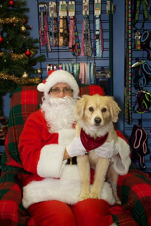 Lil' Buddy's Christmas 2011