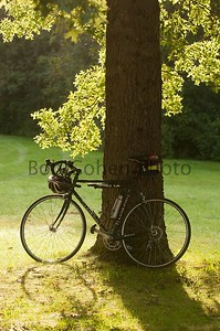 Bike and Tree_©2011RCohen