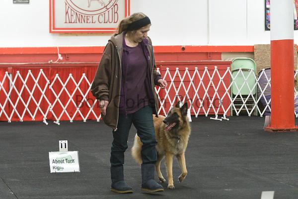 November 2017 Dog Rally