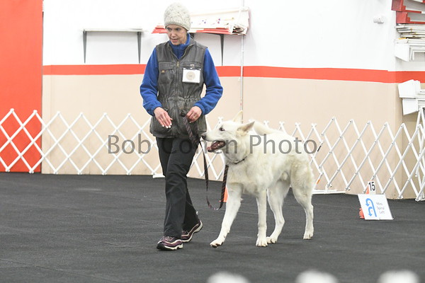 Saturday, April 7, 2018 Dog Rally Trials