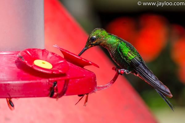 Selvatura Hummingbird Garden