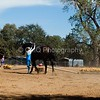 2016_Vaulting_Camelot_(3196_of_3844)
