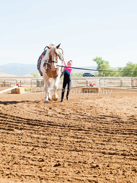 2016_Vaulting_Camelot_(1255_of_3844)