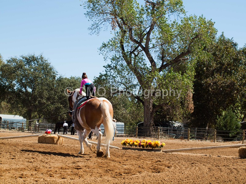 2016_Vaulting_Camelot_(2468_of_3844)