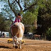 2016_Vaulting_Camelot_(2441_of_3844)