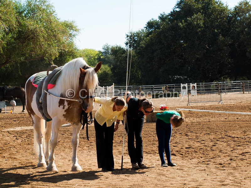2016_Vaulting_Camelot_(1439_of_3844)