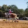 2016_Vaulting_Camelot_(2432_of_3844)
