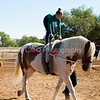 2016_Vaulting_Camelot_(1457_of_3844)