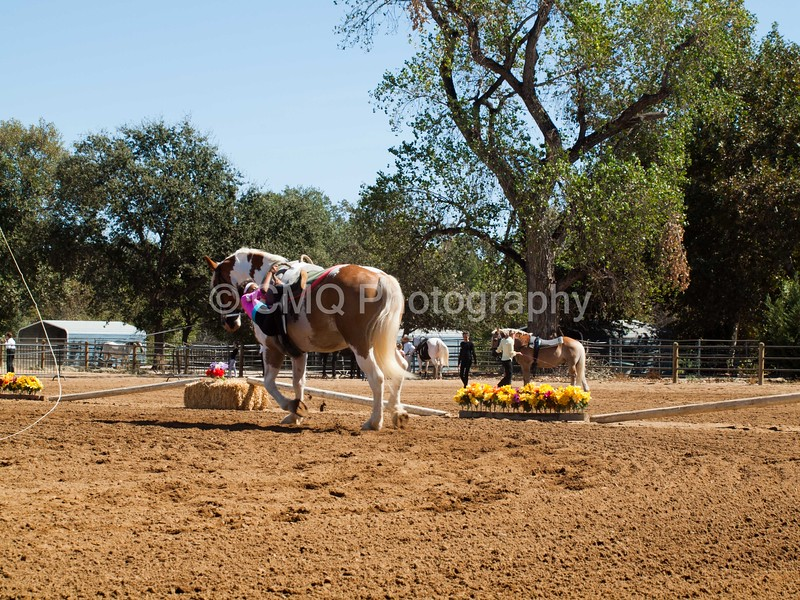 2016_Vaulting_Camelot_(2416_of_3844)