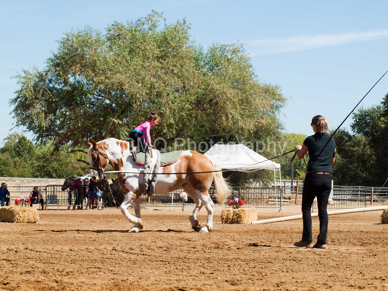 2016_Vaulting_Camelot_(2462_of_3844)