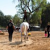 2016_Vaulting_Camelot_(1683_of_3844)