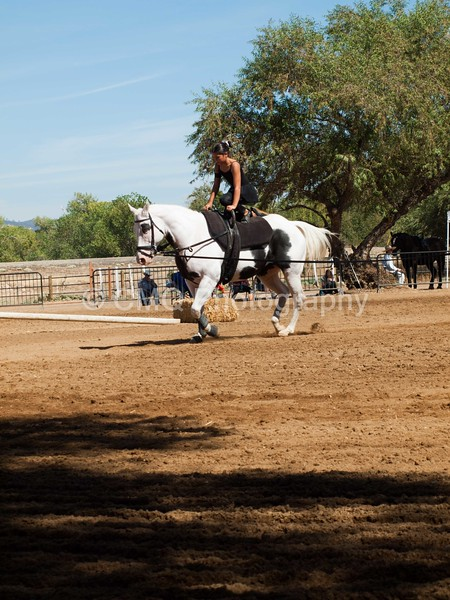 2016_Vaulting_Camelot_(2784_of_3844)