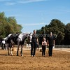 2016_Vaulting_Camelot_(2616_of_3844)
