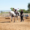 2016_Vaulting_Camelot_(1700_of_3844)