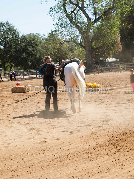 2016_Vaulting_Camelot_(1887_of_3844)