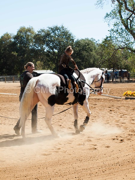 2016_Vaulting_Camelot_(1908_of_3844)