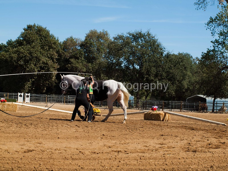 2016_Vaulting_Camelot_(2855_of_3844)