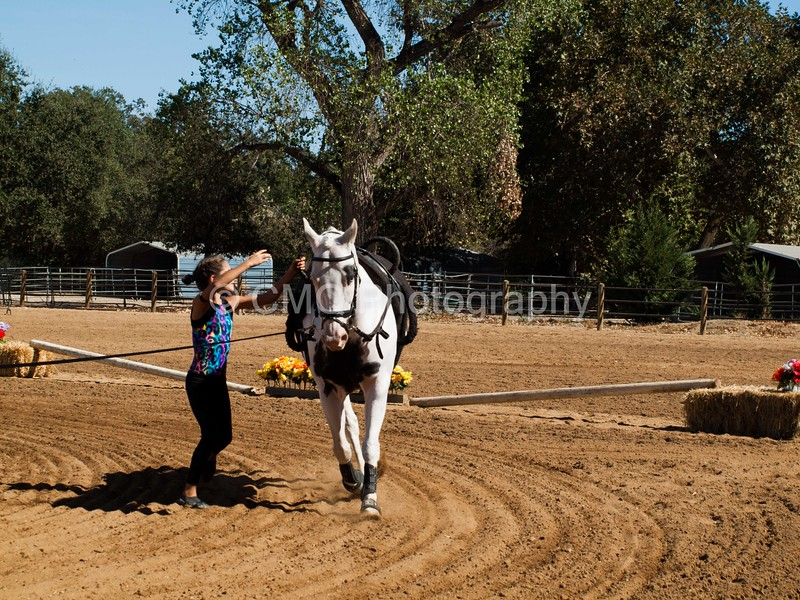 2016_Vaulting_Camelot_(3032_of_3844)