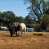 2016_Vaulting_Camelot_(2587_of_3844)