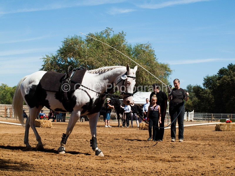 2016_Vaulting_Camelot_(2586_of_3844)