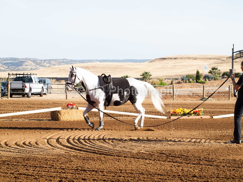 2016_Vaulting_Camelot_(22_of_3844)