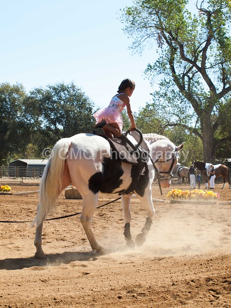 2016_Vaulting_Camelot_(1653_of_3844)