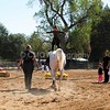 2016_Vaulting_Camelot_(1684_of_3844)