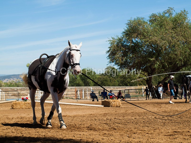 2016_Vaulting_Camelot_(2585_of_3844)