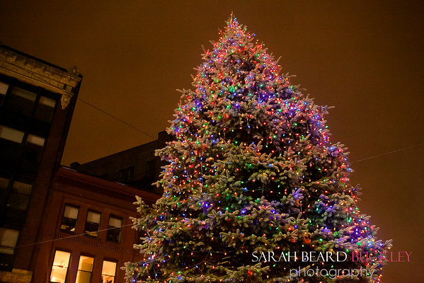 Sbbuckley_PD_TreeLighting_2016-6