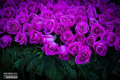 roseparade2016-1977