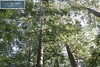 YSI Sanborn Park 9777