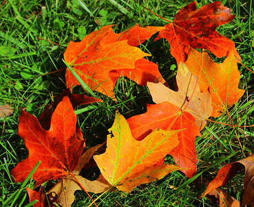 Colours of Fall