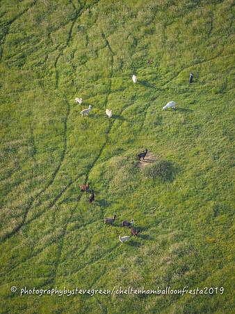 Alpaca near Stock Orchard, looking a little like a Safari :-)