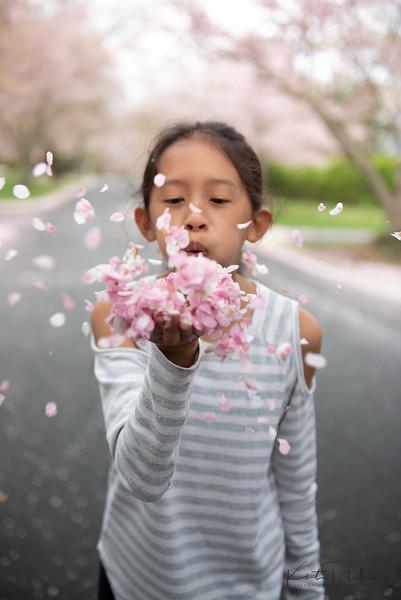 CherryBlossom-6