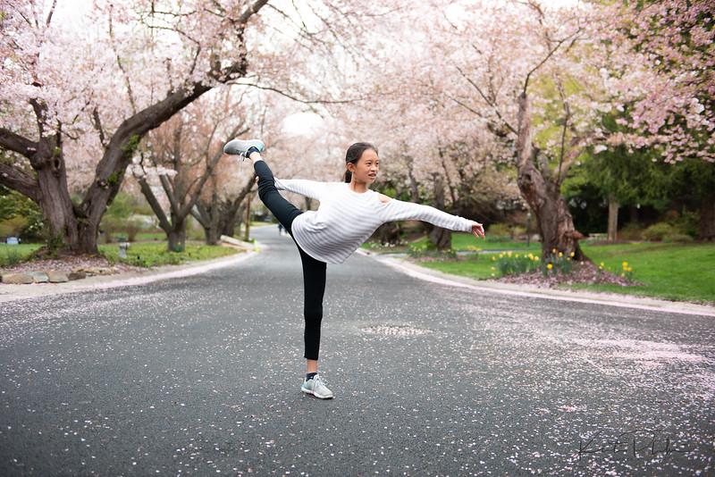 CherryBlossom-2