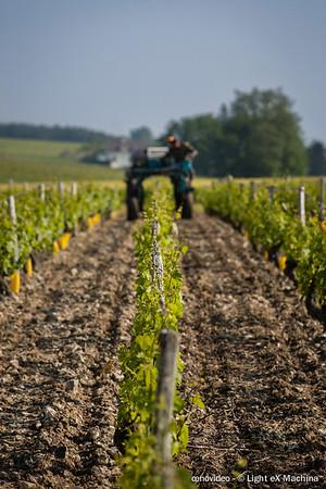 Traitement de la vigne