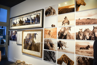 The Wild Horses of Sable Island Gallery in NYC photo by Rob Rich/SocietyAllure.com © 2015 robwayne1@aol.com 516-676-3939