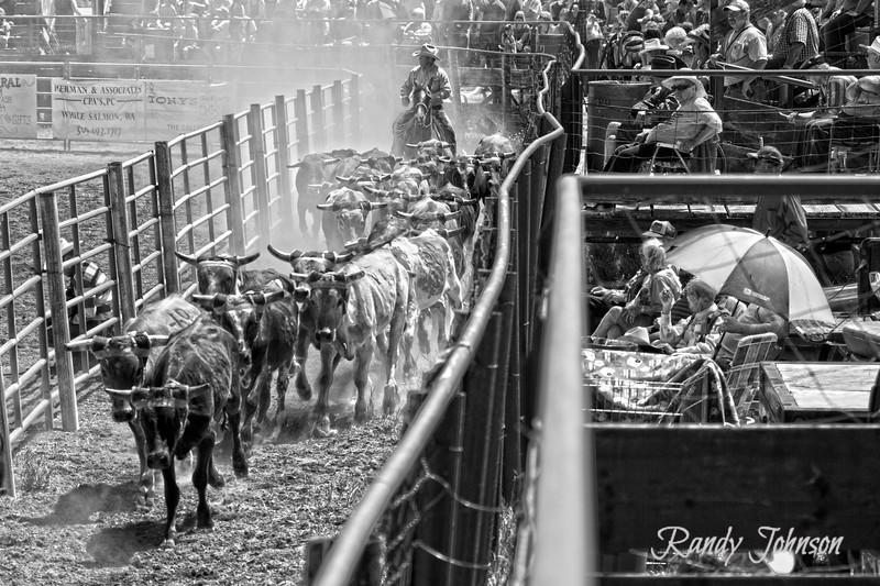 2012 Ketchum Kalf Rodeo Neil Kayser movin stock