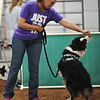 Sharon Heckman shares a treat with her austrailian shepard Prudence before their turn during the NADAC Agility Trial, Friday, April 15, 2016, at the Cleveland County Fairgrounds.  The trails continue today at 8 a.m. and is open and free to the public.  (Kyle Phillips / The Transcript)