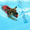 Dogs make splash at Westwood Water Park