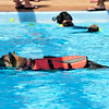 Dogs make a splash at Westwood Water Park