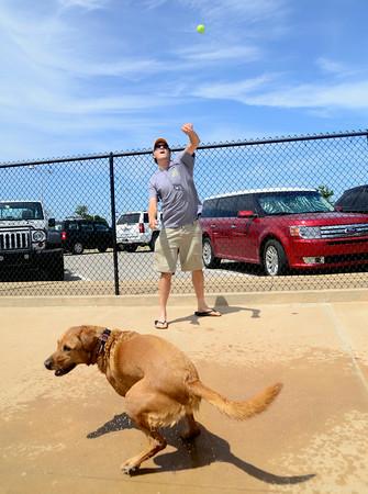 Dogs make a splash at Westwood Water Park