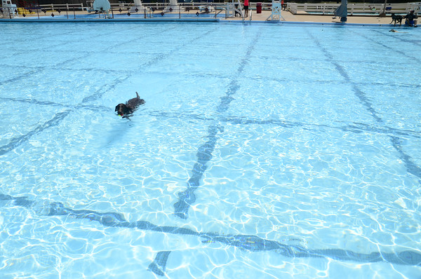 Dogs swim during the 9th annual pooch pool party at Westwood Water Park Sunday, Aug. 24, 2014.  The event is sponsored by the Norman Community Dog Park and gives dog owners a chance to let their pets safely swim in an controlled enviroment/