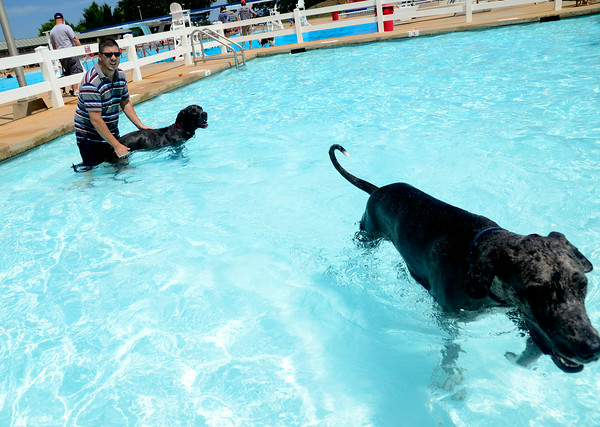 Dogs make a spash at Westwood Water Park