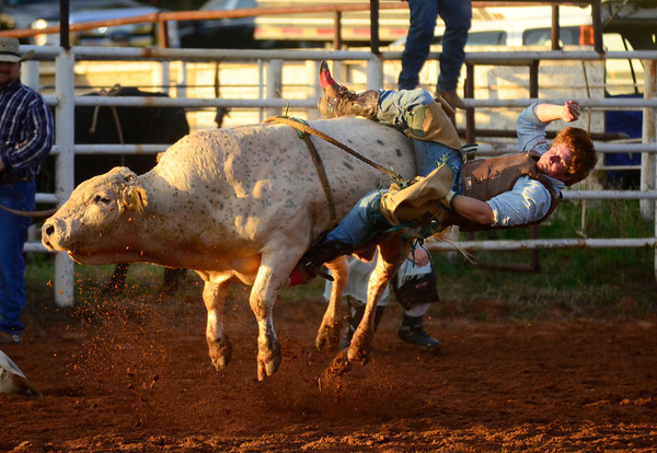 Noble Rodeo