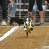 3rd Annual Wiener Dog Race
